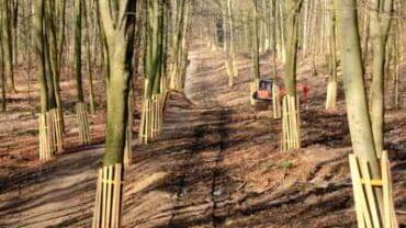 Baumschutz auf Baustellen